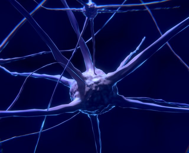 Neuroscience and fasting